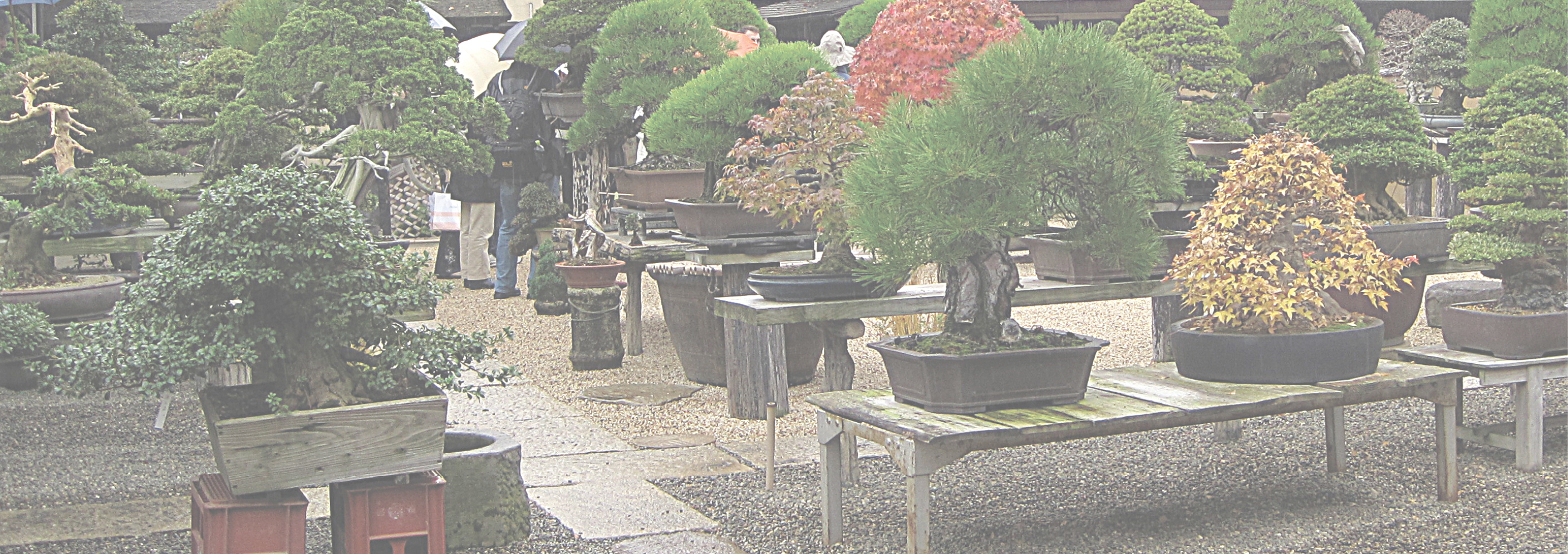 <span style='color: #003366'>Appreciation for Bonsai and Viewing Stones has spread throughout<br/> the world—a world BCI Magazine brings to you with each issue.</span>