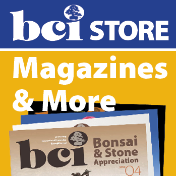 BCI icon store n more