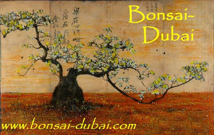 Bonsai Dubai