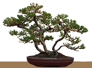 Awe Inspiring Wiring Bonsai Bci Wiring Digital Resources Funapmognl