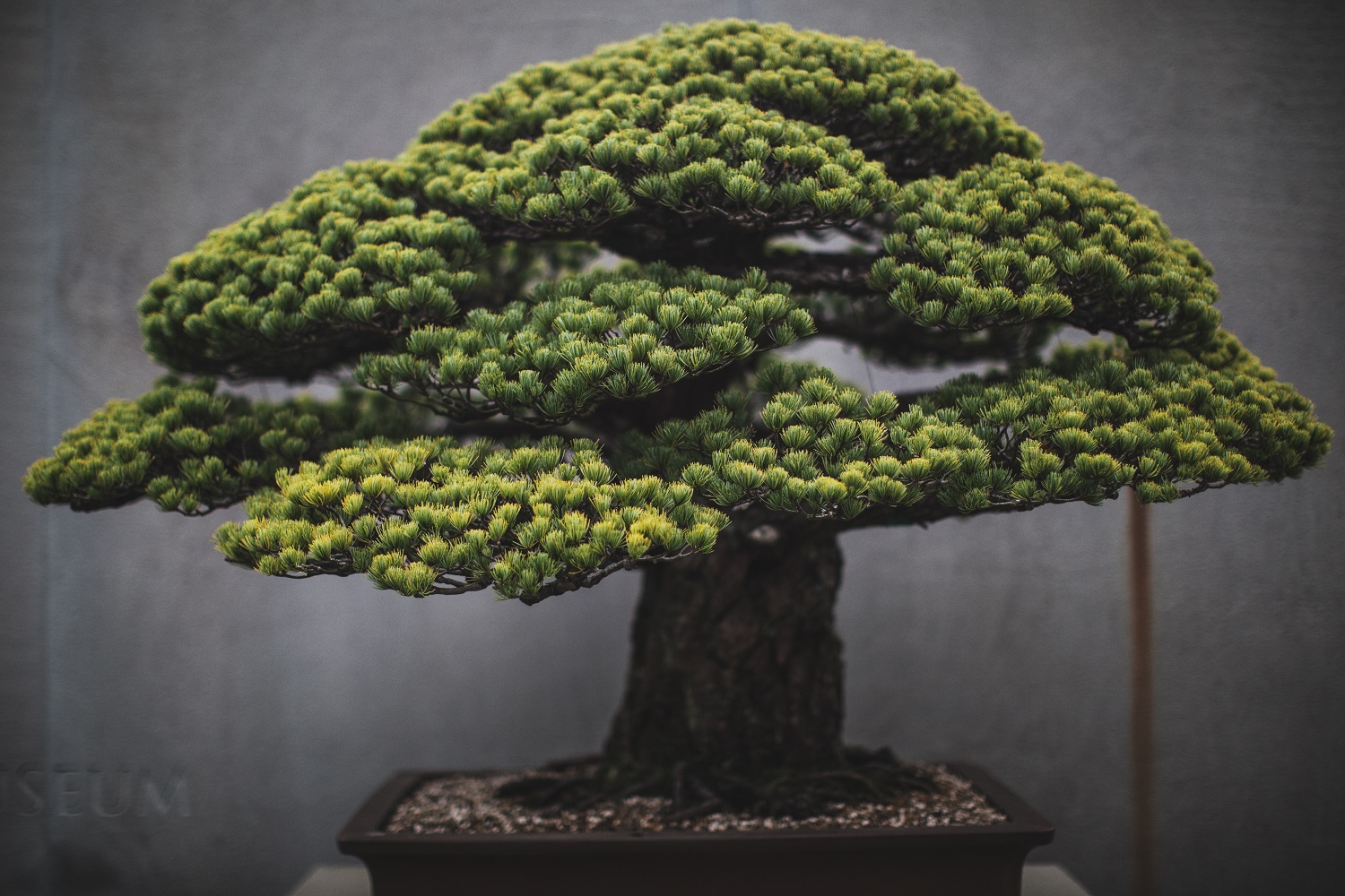 Bci Convention 2020 Details Bonsai Bci