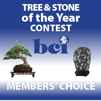 Stone Archive - Bonsai BCI