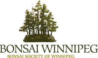 bonsai winnipeg