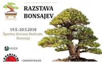 VIII International Bonsai Exhibition: